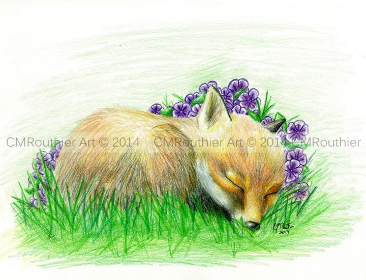 Baby Fox WtrMark
